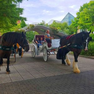60 Minute Downtown Chattanooga Carriage Ride