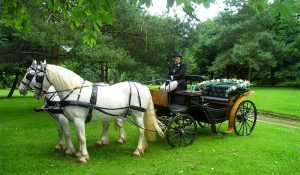 Chattanooga Horse Drawn Carriage Rides